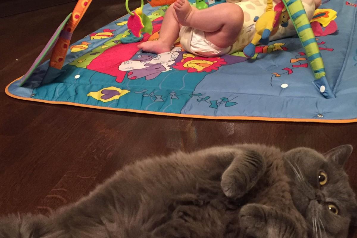 младенец и кошка в доме